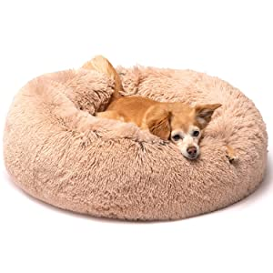 dog pet cat cute petlover friends forever bed furniture donut
