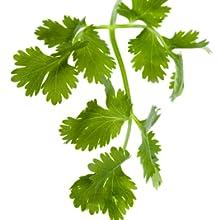 cilantro heavy metals vitamin a and k beta carotene cleanse heavy metals