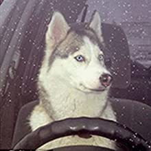 Prevent pets from making trouble while driving