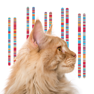 Cat with Chromosomes