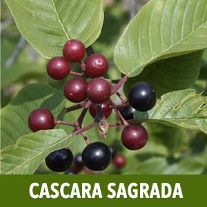 psyllium husk capsules cascara sagrada capsules senna leaf senna leaf extract senna leaf capsules