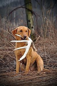 Amazon Com Dogbone Shed Dog Training Antler Retrieving