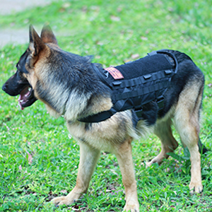 Ultrafun Dog Tactical Molle Harness