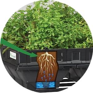 Self-watering Raised Garden Bed