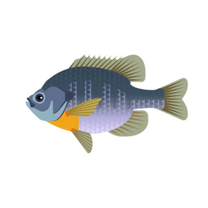 Fishing Hook Assortment Panfish Tailored Tackle