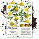 german chamomile seeds for planting