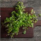 oregano seeds for planting