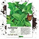 peppermint seeds for planting