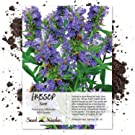 hyssop seeds for planting