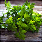 parsley seeds for planting