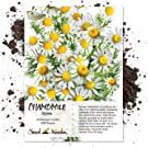roman chamomile seeds for planting