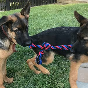 DIY Ravenox Cotton Rope Pet Toys