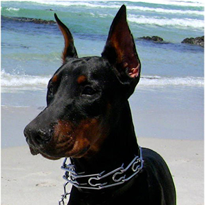 dog pinch collars for large dogs