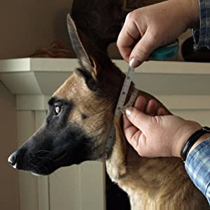 prong collars for dog