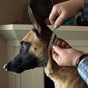 prong collars for dog