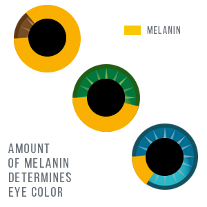 amount of melanin determines eye color icolour gradually change eye daily proven real results