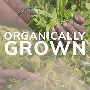 Organically Grown 100% All Natural Mushroom Coffee Elixir Superfood Drink Mix Health Boost Focus