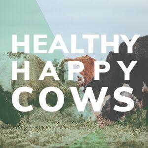 Happy Healthy Cows For Wild Whey Hormone Free Grass Fed Delicious Creamy Flavor