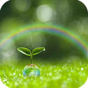 Rainbow background, plant and bubble foreground