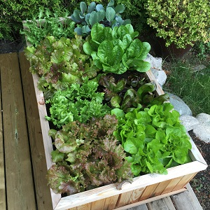 seed square foot garden tool plant family template color organize container space vegetable grow box