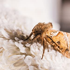 Clothes Moth Traps | AVAILABLEGIFT