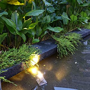 Light up your water plants