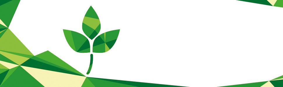 Suplementos de extracto de té verde