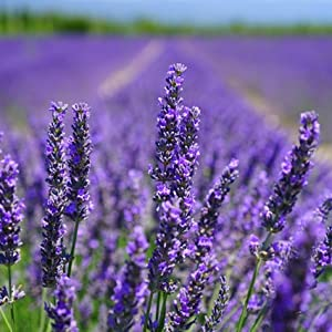 Purelis Lavender infused products will soothe your muscles and calm your mind.