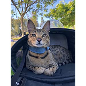 Fat Cat Cat Backpack Carrier - Cat Backpack For Cats of