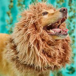 amazon dog lion commercial