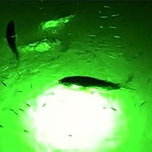 green underwater fishing light, led fishing light, green led fishing light, snook light, tarpon