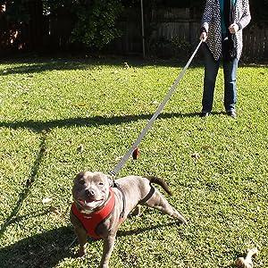 Amazon Com Primal Pet Gear Dog Leash 6ft Long Traffic