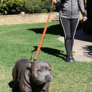 Long Leash 6ft Leashes for large and medium dogs