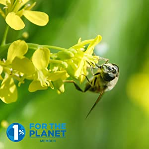 Bee on flower with 1% for the planet organization logo in corner