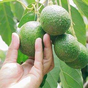 Chosen Foods Avocado Oil Spray Non-GMO Heart-Healthy High-Heat Cooking Baking Saute Vegan Recipes