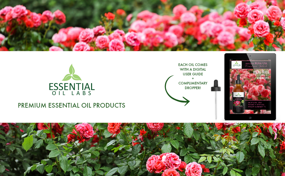 absolut rose oil, essential oil labs, rose essential oil