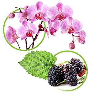 ORCHID EXTRACT MULBERRY