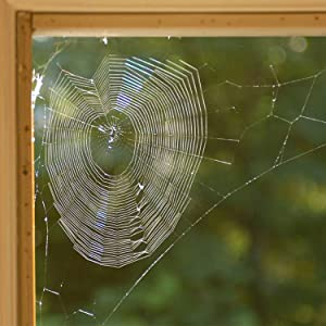 Spiders like to live in quiet, undisturbed areas.