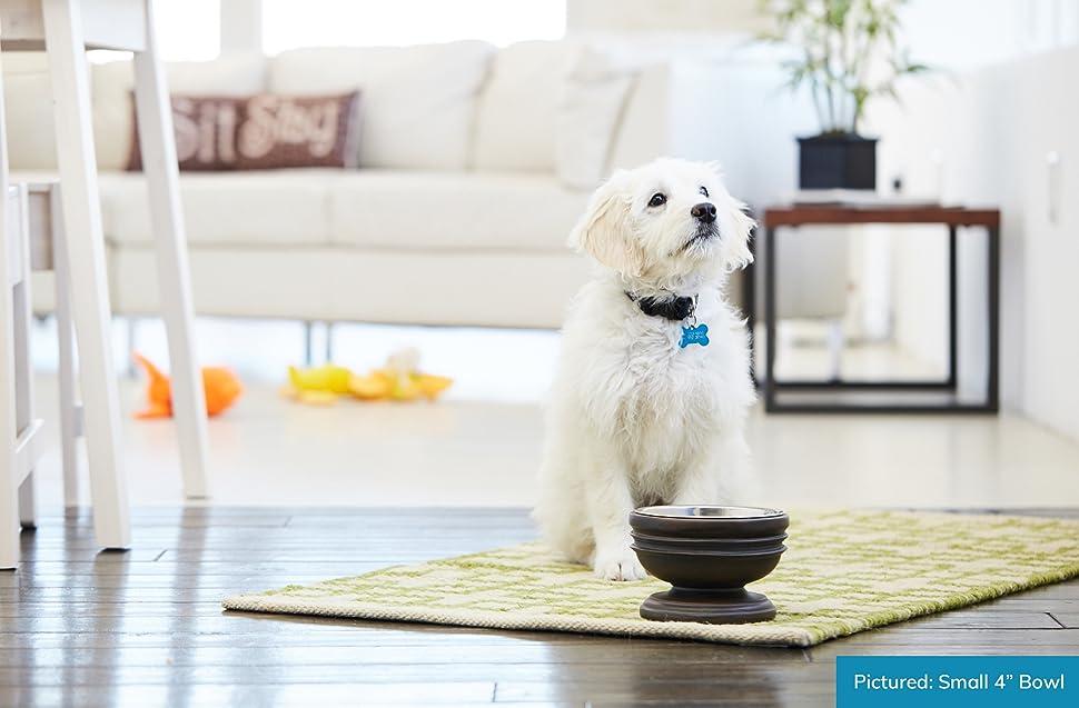 pet junkie summit raised dog bowl