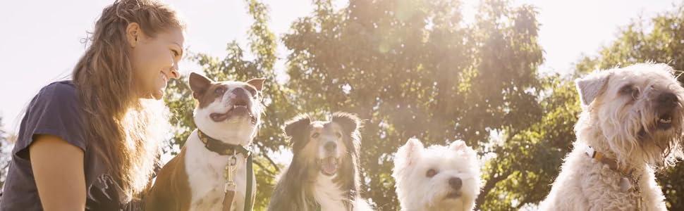 Myos Canine, Dog