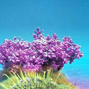 Aquamin - sea algae that contains minerals such as calcium