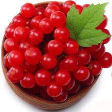 Solaray CranActin Cranberry Extract Bacterial Anti-Adherence Healthy Urinary Tract Bladder 120 VCaps