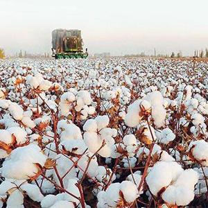 turkish cotton