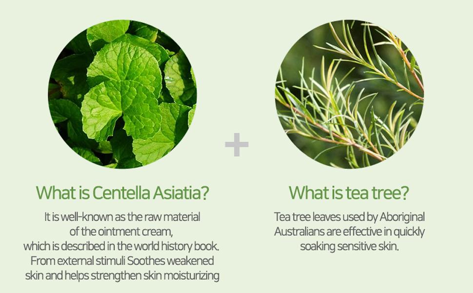 korean skincare,k beauty,centella asiatica,gel cream,calming cream,soothing cream,tea tree extract