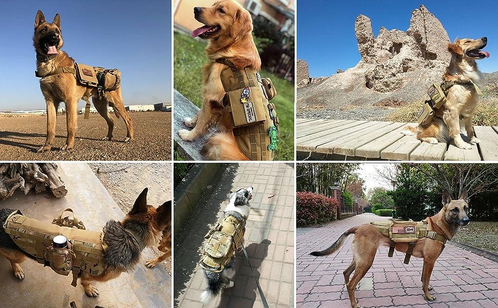 dog military vest