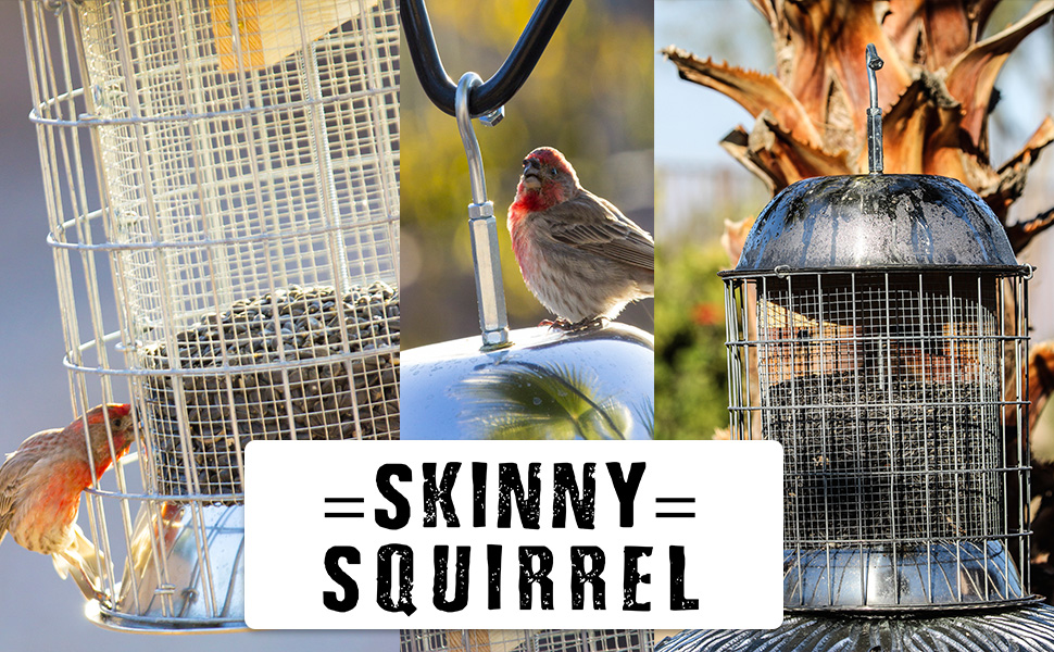 squirrel inch com baffler amazon perky dp pole transparent feeder mounted pet bird