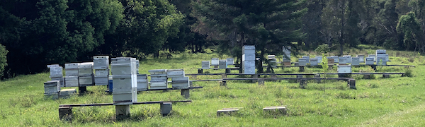 Clean Air And Pristine Envirnomental Conditions Are What Keeps Bees Happy!