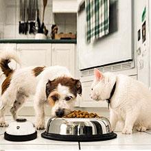 dog potty training bell