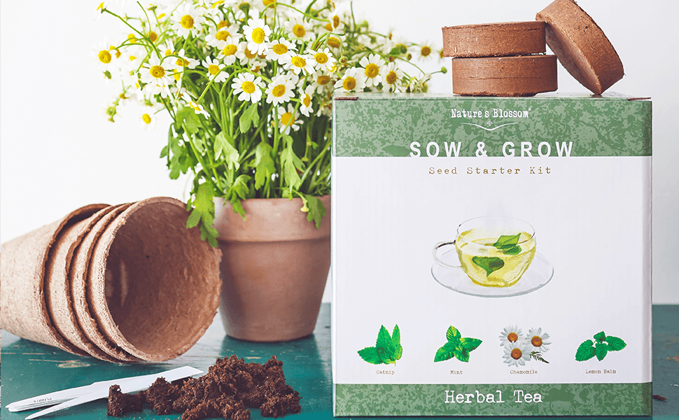 Amazon Com Grow 4 Herbs For Making Herbal Tea Indoor Garden Seed Starter Kit For Planting Organic Mint Seeds Catnip Seeds Lemon Balm And Chamomile Complete Growing Set For Beginners And
