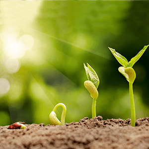 high germination rate from plant to seed